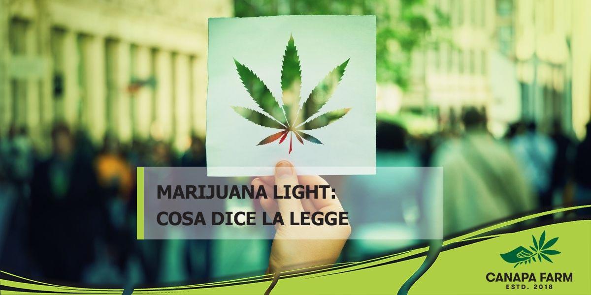 marijuana legale in italia