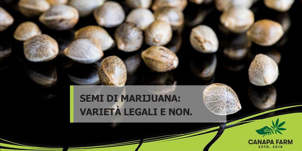 semi di marijuana