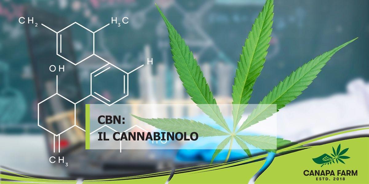 CBN cannabinolo cannabis