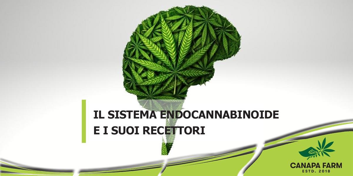 recettori cannabinoidi e sistema endocannabinoide