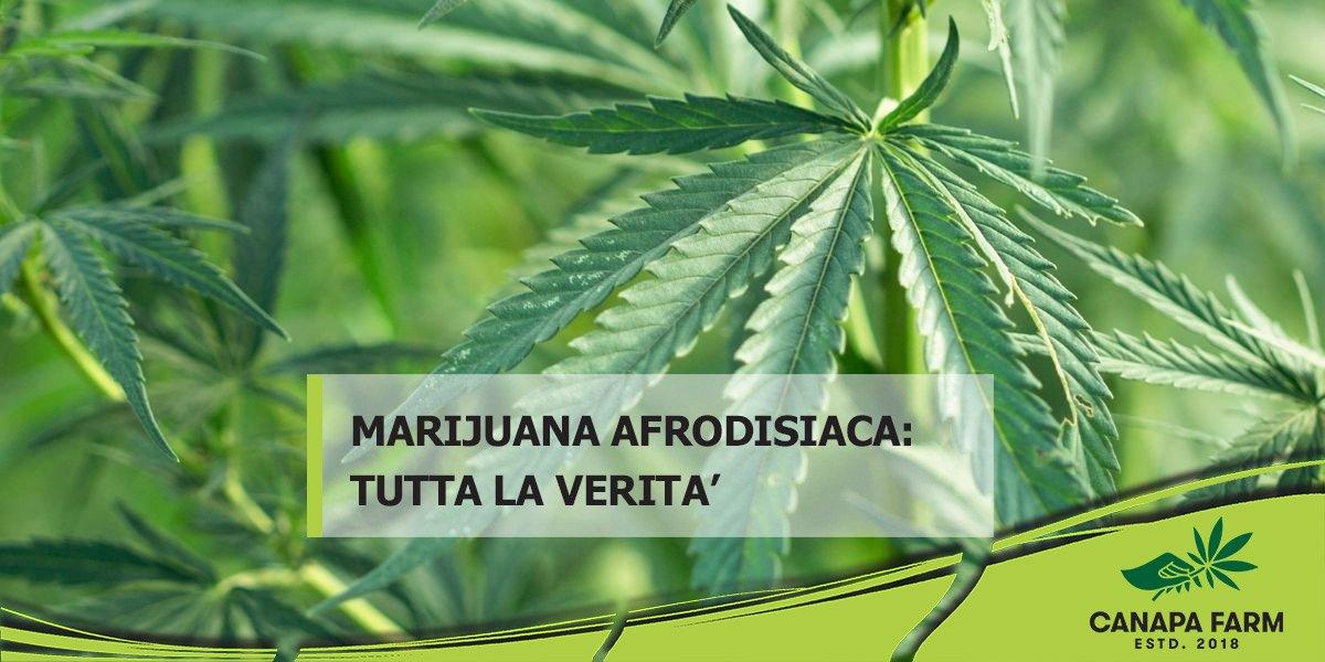 marijuana afrodisiaca